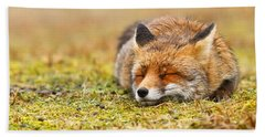 Comfortably Fox Beach Towel