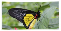 Beach Towel featuring the photograph Common Birdwing Butterfly by Judy Whitton