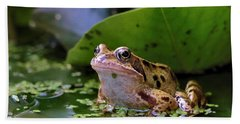 Common Frog Beach Towel