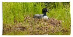 Common Loon Nesting Beach Sheet