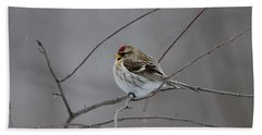 Beach Towel featuring the photograph Common Redpoll by David Porteus