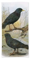 Common Starling Top And Intermediate Starling Bottom Beach Towel by English School