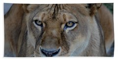 Concerned Lioness Beach Towel