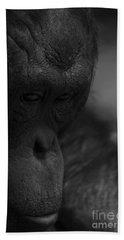 Contemplating Orangutan Beach Towel