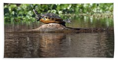 Beach Towel featuring the photograph Cooter On Alligator Log by Paul Rebmann