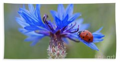 Beach Towel featuring the photograph Cornflower Ladybug Siebenpunkt Blue Red Flower by Paul Fearn