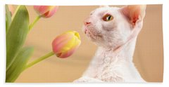 Cornish Rex Cat Beach Towel by Verena Matthew