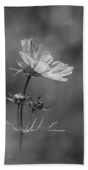 Beach Towel featuring the photograph Cosmo Flower Reaching For The Sun by Debbie Green