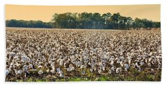 Cotton Fields Back Home Beach Sheet by Jan Amiss Photography