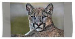 Beach Sheet featuring the photograph Cougar  by Savannah Gibbs