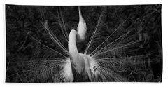 Beach Towel featuring the photograph Great Egret Courtship Plumes  by John F Tsumas