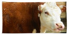 Beach Towel featuring the photograph Cow Lickin' Good by Emmy Marie Vickers