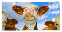 Cow Looking At You - Funny Animal Picture Beach Sheet by Matthias Hauser