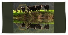 Cow Reflections Beach Towel