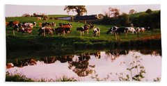 Cows In The Canal Beach Towel