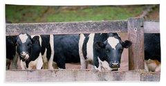 Cows Looking Through A Fence Beach Towel