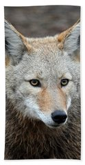 Beach Towel featuring the photograph Coyote by Athena Mckinzie