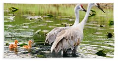 Crane Family Goes For A Swim Beach Sheet by Susan Molnar