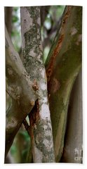 Beach Towel featuring the photograph Crape Myrtle Branches by Peter Piatt
