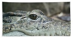 Beach Towel featuring the photograph Crocodile Animal Eye Alligator Reptile Hunter by Paul Fearn