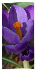 Crocus Mother And Child Beach Towel