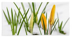 Crocuses In Snow Beach Towel