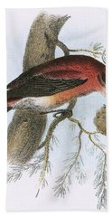 Crossbill Beach Towel by English School