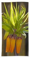 Crown Imperial Fritillaria Imperialis Flower Beach Towel