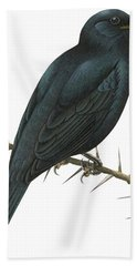 Cuckoo Shrike Beach Towel