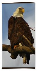 Curious Bald Eagle Beach Sheet by Bruce Bley