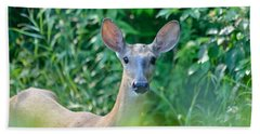 Curious Doe Beach Towel by David Porteus