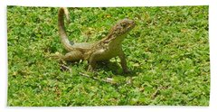 Curly-tailed Lizard Beach Towel by Ron Davidson