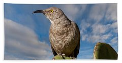 Curve-billed Thrasher On A Prickly Pear Cactus Beach Sheet