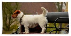 Cute Dog On Carriage Seat Bruges Belgium Beach Towel