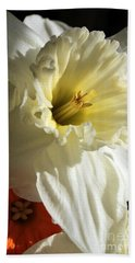 Daffodil Still Life Beach Sheet by Kenny Glotfelty