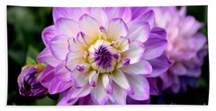Dahlia Flower With Purple Tips Beach Sheet