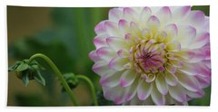 Dahlia In The Mist Beach Towel