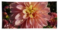 Dahlia October Beach Sheet by Susan Garren
