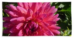 Dahlia Pink Beach Sheet by Susan Garren