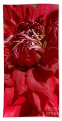 Dahlia Viiii Beach Towel by Christiane Hellner-OBrien