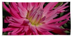 Beach Towel featuring the photograph Dahlia X by Christiane Hellner-OBrien