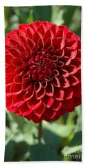 Beach Towel featuring the photograph Dahlia Xii by Christiane Hellner-OBrien