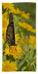 Beach Sheet featuring the photograph Daisy Daisy Give Me Your Anther Do by Gary Holmes