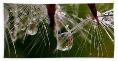 Dandelion Droplets Beach Sheet by Suzanne Stout