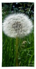 Dandelion Fluff Beach Sheet by Kerri Mortenson