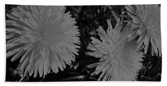 Beach Towel featuring the photograph Dandelion Weeds? B/w by Martin Howard