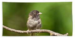 Dark Eyed Junco Beach Sheet