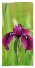 Dark Magenta Iris Beach Sheet by E Faithe Lester