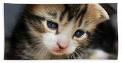 Beach Towel featuring the photograph Daydreamer Kitten by Terri Waters