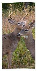 Deer 48 Beach Sheet